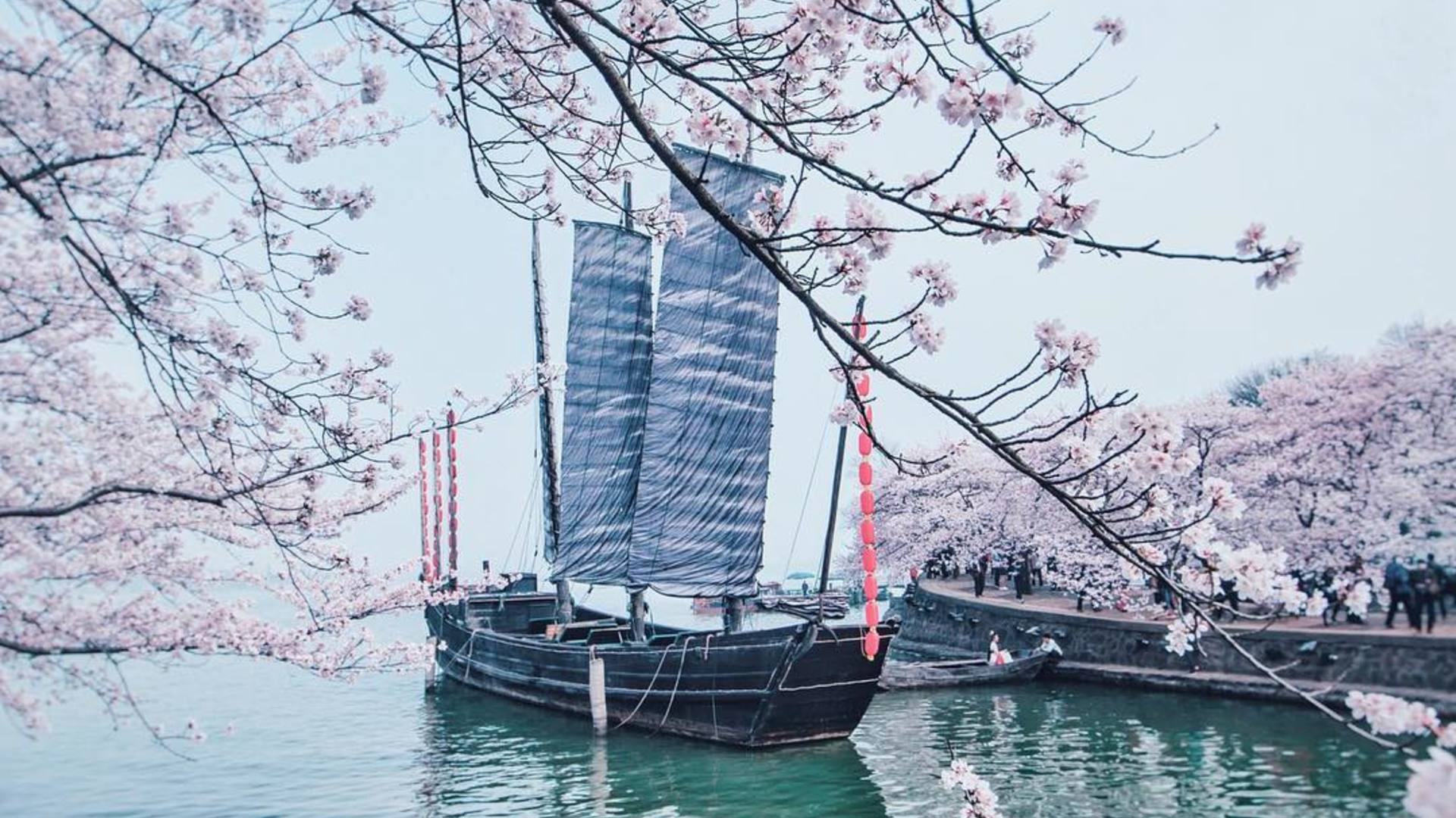 9 Places Other Than Tokyo Where the Cherry Blossoms Are Blooming