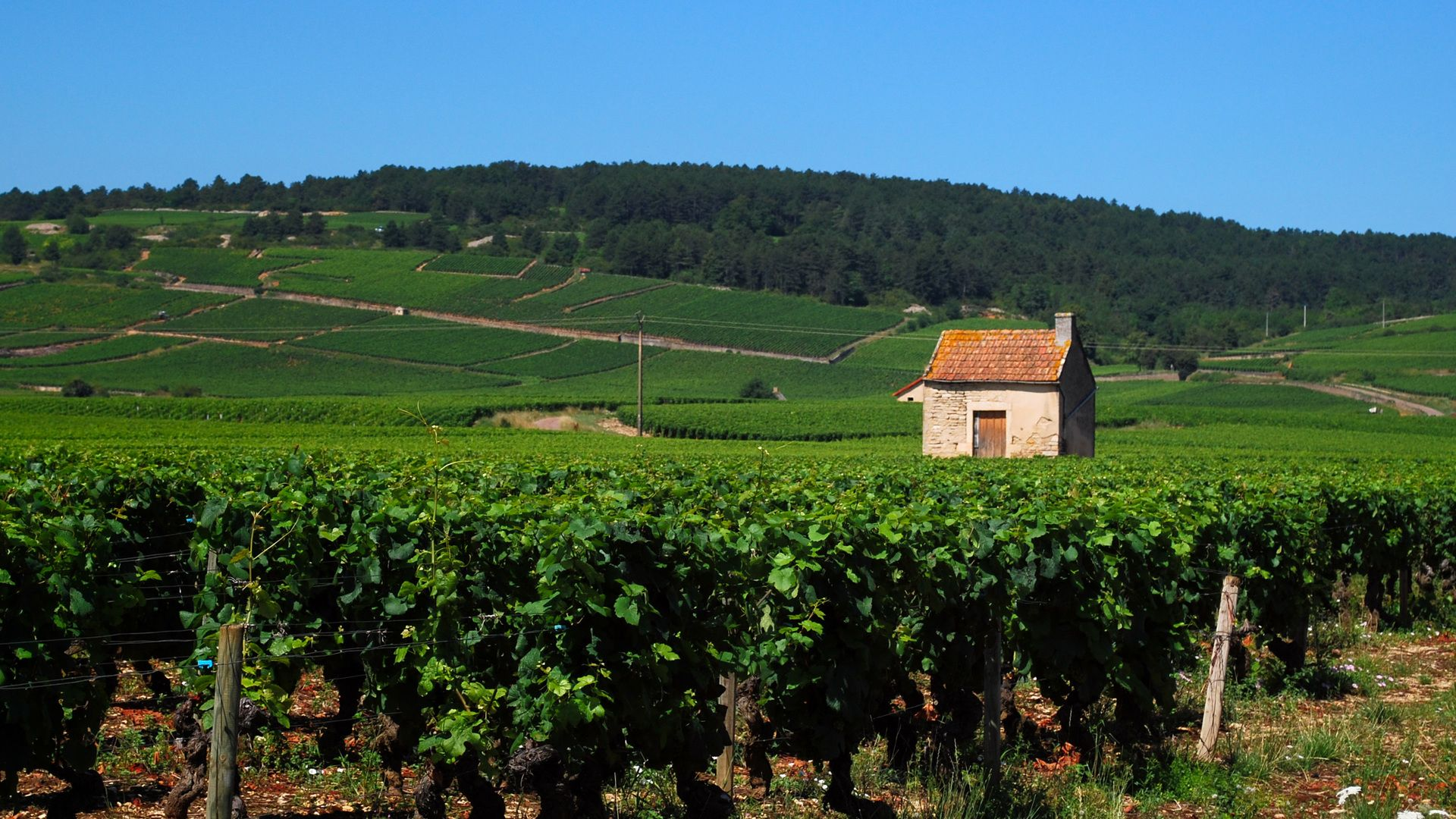 My Favorite Places In Burgundy (From A Grand Cru Winemaker)