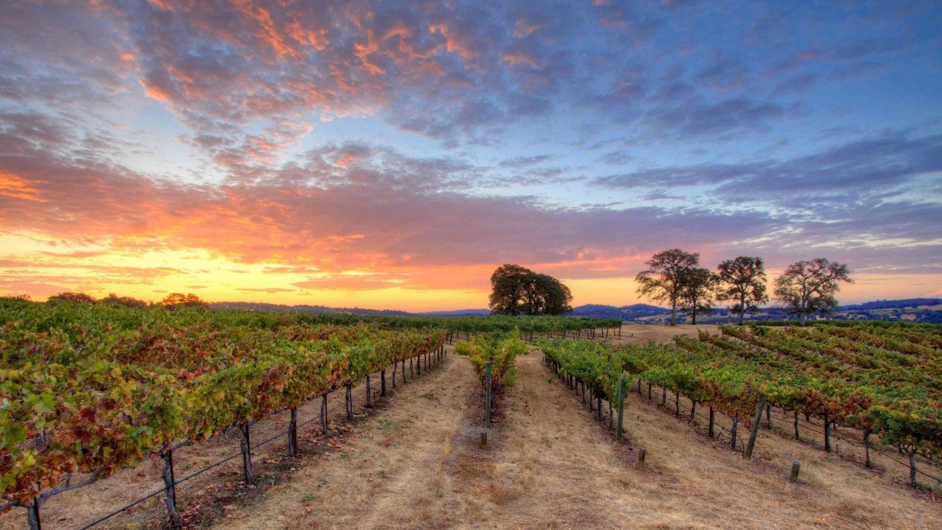 The Best Vineyards To Visit In Santa Barbara According To Master Somm Dustin Wilson