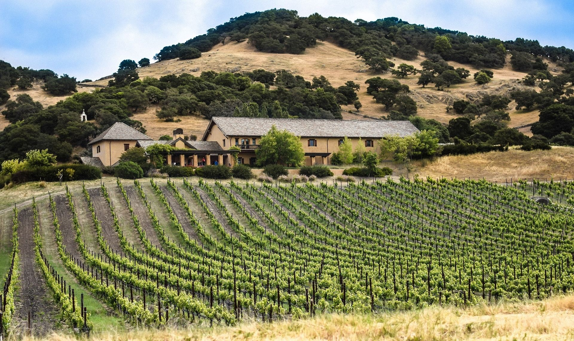 Napa With Kids: A Complete Guide